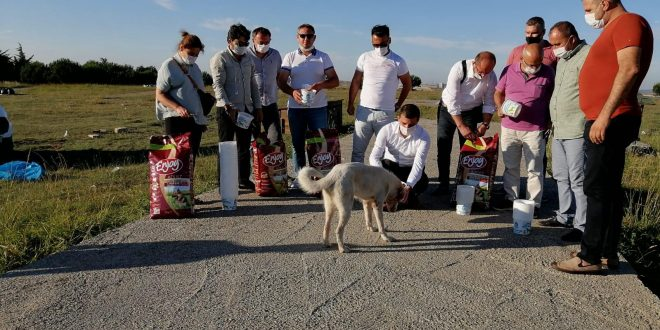 Bahçekent'te tüm yönetimler sokak hayvanları için birlik oldu