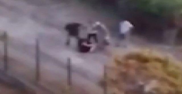 Başakşehir'de sokak köpeklerini besleyen kadını baba-kız darbetti